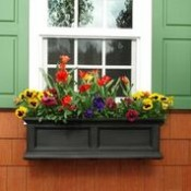 Window Boxes